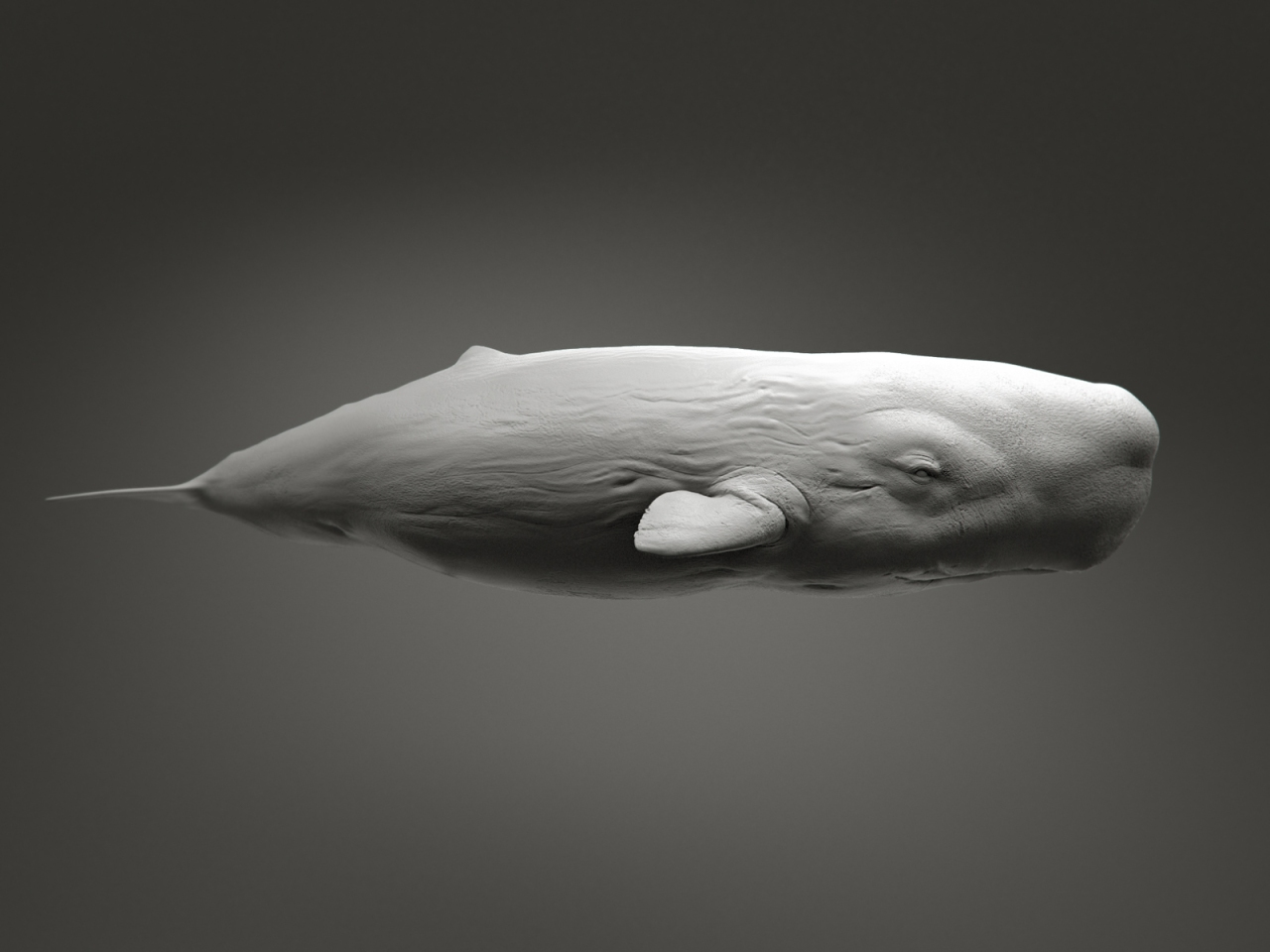 sperm_whale_by_kimsuyeong81-d5sc1v1